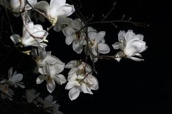 beautiful flower on the night