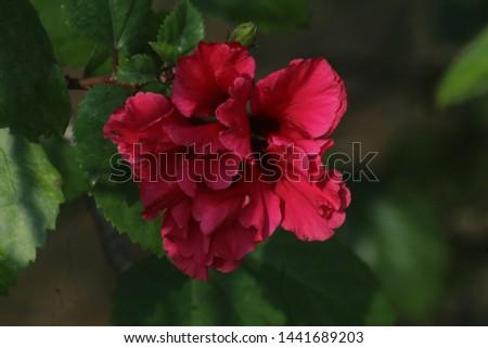 beautiful flower outdoor photography, sundarban #1441689203