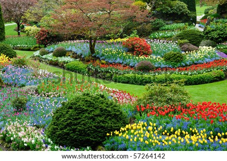 Beautiful flower pattern in spring garden victoria british columbia