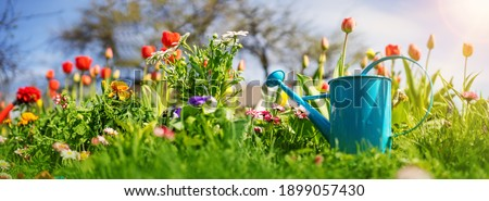 Beautiful flower seedlings growing in the soil at the garden. Watering can standing on the earth. Gardening hobby concept.