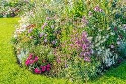 beautiful flowerbed in bloom in the garden