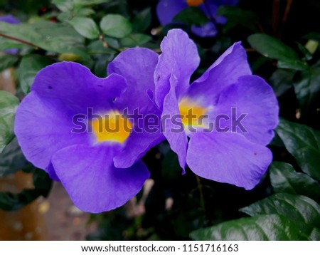 Beautiful Flowers  #1151716163