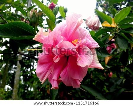 Beautiful Flowers  #1151716166