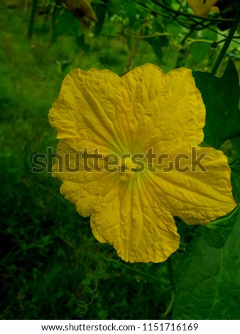 Beautiful Flowers  #1151716169