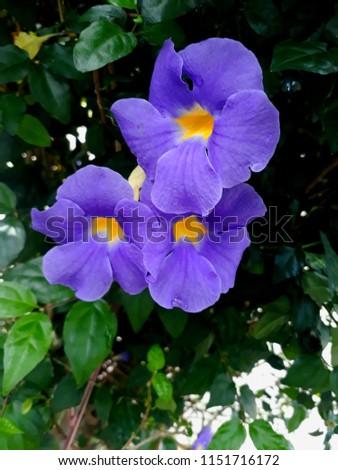 Beautiful Flowers  #1151716172