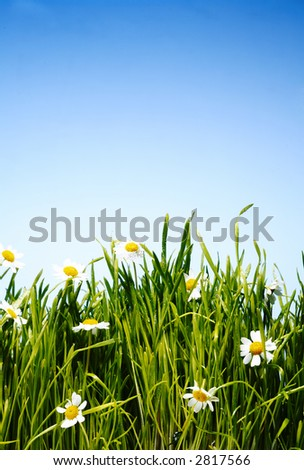 beautiful flowers among green grass