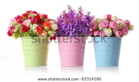 beautiful flowers and colorful floral disc