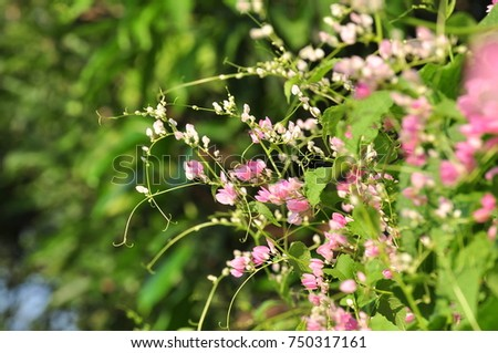 Beautiful flowers and grass in nature on a sunny day pink flowers beautiful flowers and grass in nature on a sunny day pink flowers with bee colonies mightylinksfo