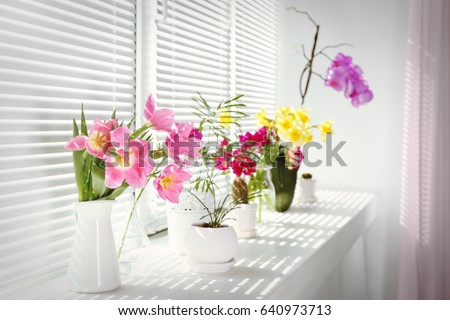 Beautiful flowers and home plants on windowsill