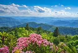 Beautiful flowers blooming in the  mountains. Green hills,meadows and sky in the background. Summer mountain landscape. Near Asheville ,Blue Ridge Mountains, North Carolina, USA.