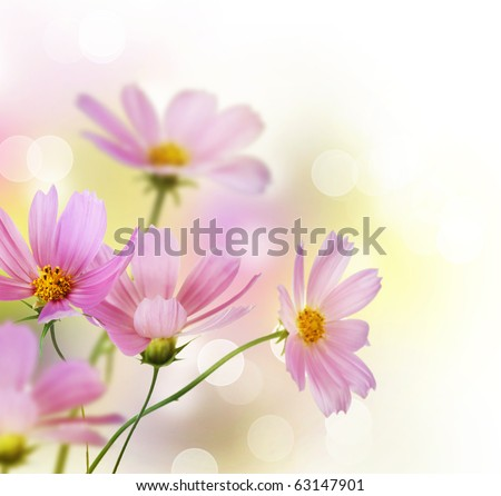 Beautiful Flowers Border.Floral design