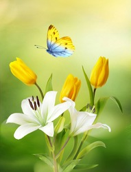 Beautiful  flowers bouquet of yellow tulips, white lilies and butterfly on natural green-yellow background close-up outdoors. Elegant refined image of beauty of nature.