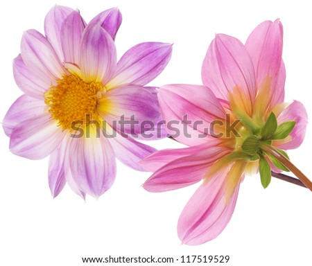 Beautiful flowers card.Floral background