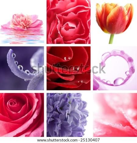 beautiful flowers collage of nine photos