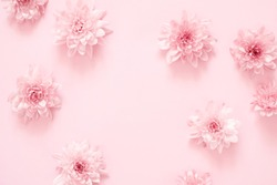 Beautiful flowers composition. Pink flowers on pastel pink background. Valentines Day, Easter, Happy Women's Day, Mother's day. Flat lay, top view, copy space