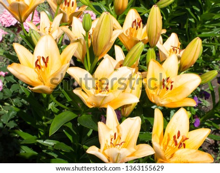 beautiful flowers growing in a flowerbed, a birthday present