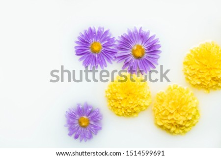 Beautiful flowers in a milk bath. Concept of spa treatments, relaxation, spa treatments, therapy