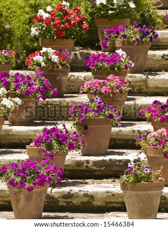 Pictures of Beautiful Flower Pots http://www.shutterstock.com/pic-15466384/stock-photo-beautiful-flowers-in-clay-pots-on-limestone-steps.html