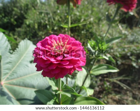 beautiful flowers in magenta with natural and fresh natural surroundings during the day in the mountain area