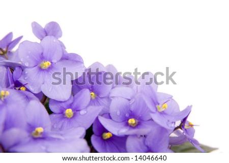 beautiful flowers isolated on white background