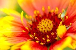 Beautiful flowers  Macro Shot