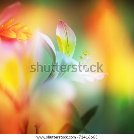 beautiful flowers made with color filters. can be used as background