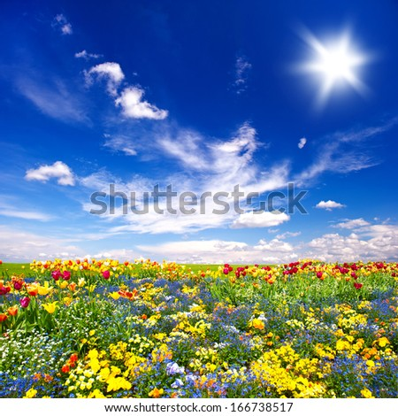 beautiful flowers meadow and cloudy blue sky. nature landscape