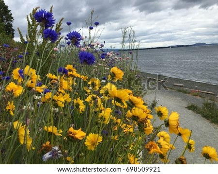 Beautiful Flowers Near Seaside 698509921