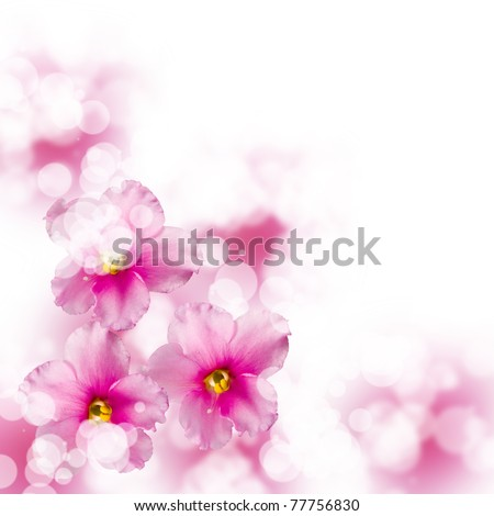 Beautiful  flowers on a blue and white background
