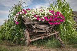 Beautiful flowers on the old horse-drawn cart.