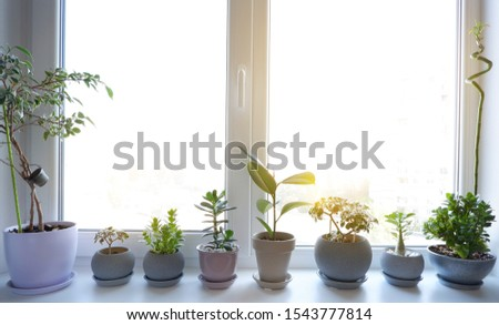 Beautiful flowers on the windowsill. Indoor plants stand on a plastic windowsill. Plastic windows. Double-glazed window.