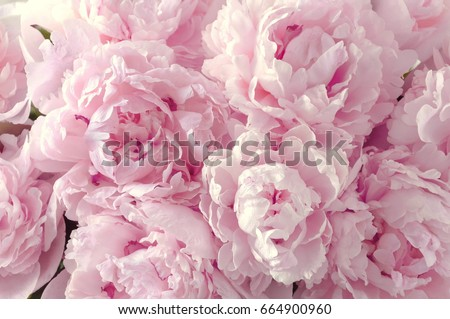 Photo of  Beautiful flowers, peonies. Bouquet of pink peony background.