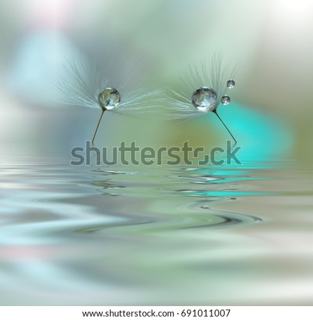 Beautiful flowers reflected in the water, spa concept.Spa still life.Abstract macro photo with water drops.Flowers with pastel tones.Tranquil abstract closeup art photography.Floral fantasy design.