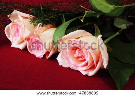 beautiful flowers roses red. Special roses red roses,white