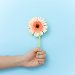 Beautiful flowers to gift in hand over blue background. Spring time and inspiration