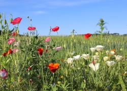 Beautiful flowery roadside. A sunny summer day in the countryside in Denmark
