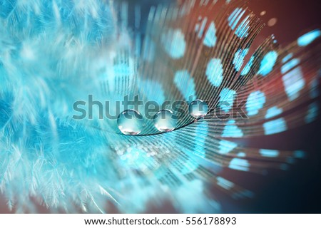 Shutterstock Beautiful fluffy air blue feather bird with spots and droplets of rain water dew on a blue brown background close-up macro. Abstract creative elegant artistic image for wallpaper or design.