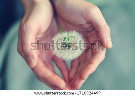 beautiful fluffy dandelion flower in girl's hands, care, protection, wishes and dreams concept, spiritual soul Stock photo ©