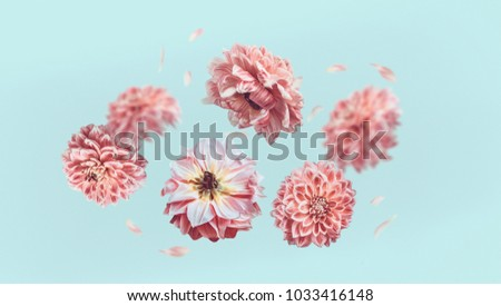 Beautiful  flying pastel pink flowers and petals at light blue background, creative floral layout, horizontal #1033416148