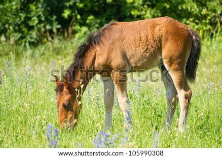 Beautiful foal on a meadow