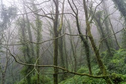 Beautiful foggy, misty woodland scene. Taken in Sintra, Portugal in winter