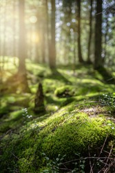 Beautiful forest background with sun rays. Natural scene for product presentation. The stones are covered with green moss