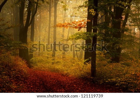 Beautiful forest during a foggy autumn day | late autumn in November