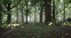 Beautiful forest in spring time with sun shining through the trees