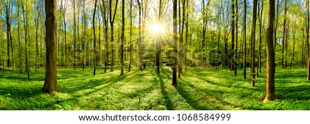 Beautiful forest in spring with bright sun shining through the trees #1068584999