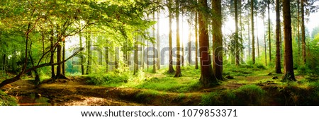 Beautiful forest in spring with bright sun shining through the trees 商業照片 ©