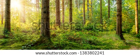 Beautiful forest in spring with bright sun shining through the trees #1383802241