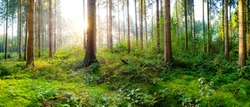 Beautiful forest in springtime with bright sun shining through the trees