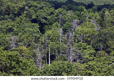 Beautiful forest in the popular Blue Ridge  Mountains in Shenandoah national park