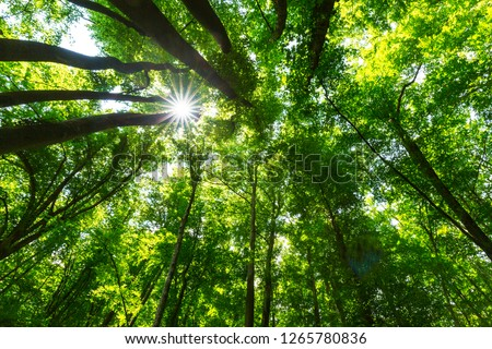 Beautiful forest in the spring and lush green foliage on a bright sunny day